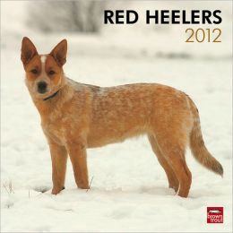 2012 Red Heelers Square 12X12 Wall Calendar