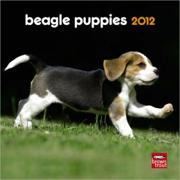 2012 Beagle Puppies 7X7 Mini Wall Calendar