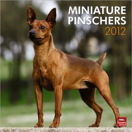 2012 Miniature Pinschers Square 12X12 Wall Calendar