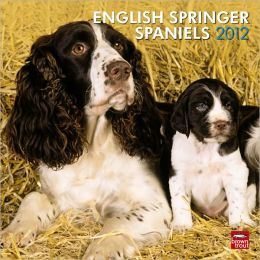2012 English Springer Spaniels (Intl) Square 12X12 Wall Calendar
