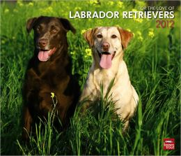2012 Labrador Retrievers, For The Love Of Dlx Wall Calendar