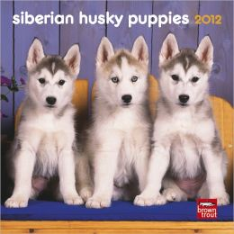 Siberian Husky Puppies 2012 7X7 Mini Wall