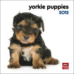 2012 Yorkshire Terrier Puppies Mini Wall Calendar