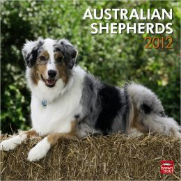 2012 Australian Shepherds Square 12X12 Wall Calendar