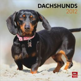 2012 Dachshunds Square 12X12 Wall Calendar