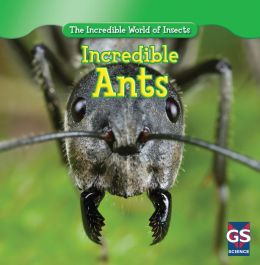 Incredible Ants