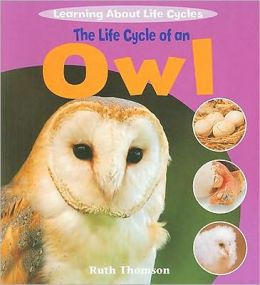 The Life Cycle of an Owl