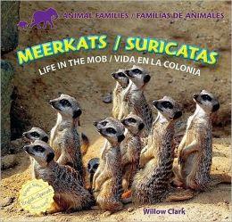 Meerkats / Suricatas