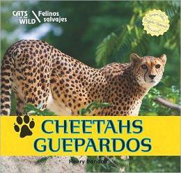 Cheetahs / Guepardos