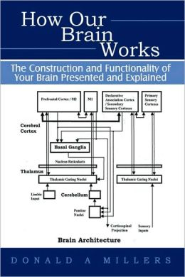 how the brain works pdf