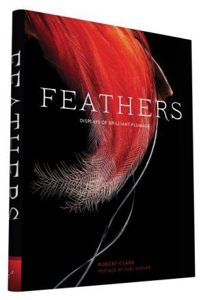 Feathers: Displays of Brilliant Plumage