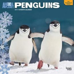 2014 Animal Planet Penguins Square 12x12