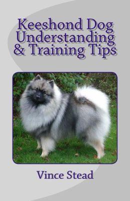 Keeshond Dog Understanding & Training Tips