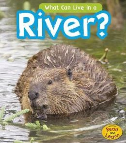 What Can Live in the River?