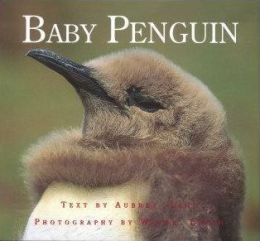 Baby Penguin (Nature Babies Series)
