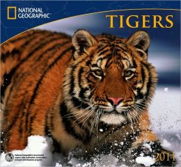 2011 National Geographic Tigers Wall Calendar