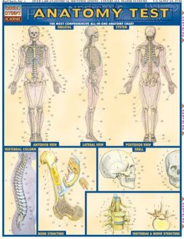 Anatomy Test Laminate Reference Chart: The Most Comprehensive All-In-One Anatomy Chart Test