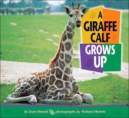 A Giraffe Calf Grows Up (Baby Animals Series)