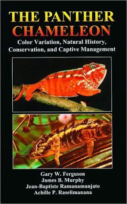 Panther Chameleon: Color Variation, Natural History, Conservation, and Captive Management