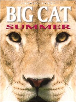 Big Cat Summer