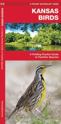 Kansas Birds: An Introduction to Familiar Species