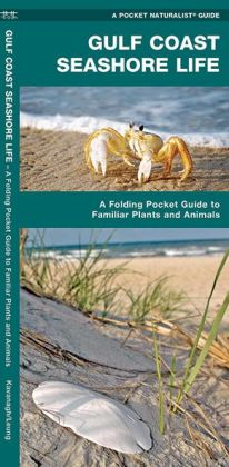 Gulf Coast Seashore Life: An Introduction to Familiar Plants and Animals