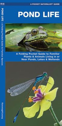 Pond Life: An Introduction to Familiar Plants and Animals Living in or Near Ponds, Lakes, and Wetlands