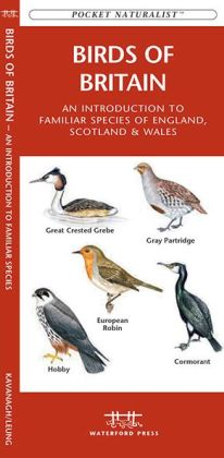 Birds of Britain: An Introduction to Familiar Species
