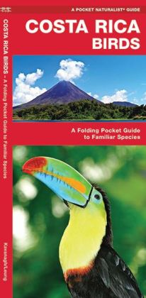 Costa Rica Birds: An Introduction to Familiar Species