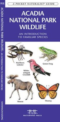 Acadia National Park Wildlife: An Introduction to Familiar Species (Pocket Naturalist Series)