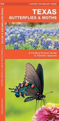 Texas Butterflies and Moths: An Introduction to Familiar Species