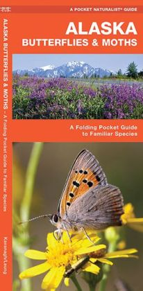 Alaska Butterflies and Moths: An Introduction to Familiar Species (Pocket Naturalist Series)