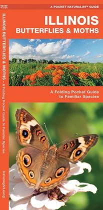 Illinois Butterflies and Moths: An Introduction to Familiar Species (Pocket Naturalist Series)