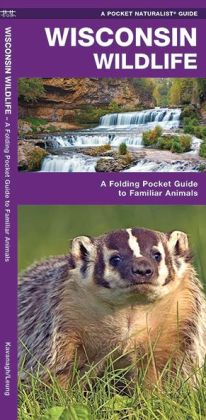 Wisconsin Wildlife: An Introduction to Familiar Species