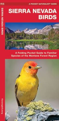 Sierra Nevada Birds: A Folding Pocket Guide to Familiar Montane Forest Species