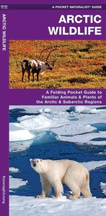 Arctic Wildlife: An Introduction to Familiar Species