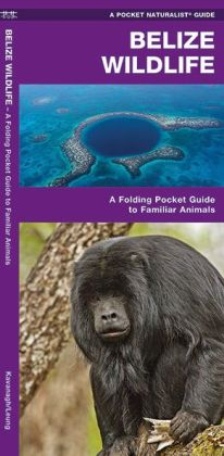 Belize Wildlife: An Introduction to Familiar Species