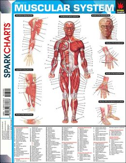 Muscular System (SparkCharts)