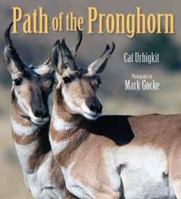 The Path of the Pronghorn