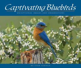 Captivating Bluebirds: Exceptional Images and Observations