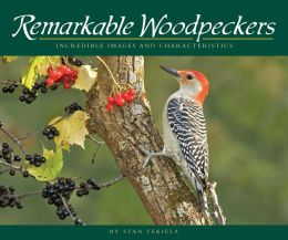 Remarkable Woodpeckers: Incredible Images and Characteristics
