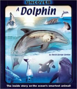 Uncover a Dolphin