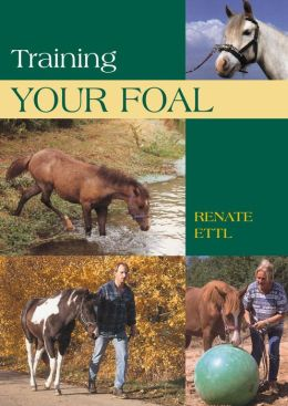 Training Your Foal