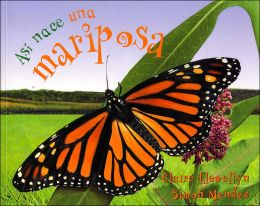 Así nace una mariposa