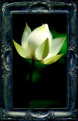 Letting The Lotus Bloom