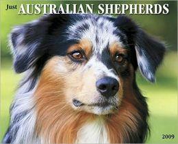 2009 Australian Shepherds (Just) Wall Calendar