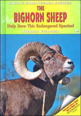 The Bighorn Sheep: Help Save This Endangered Species!