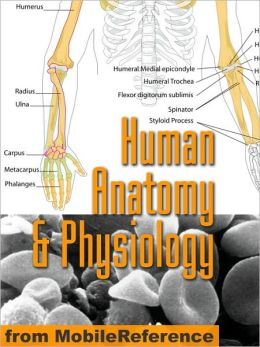 Human Anatomy and Physiology Study Guide