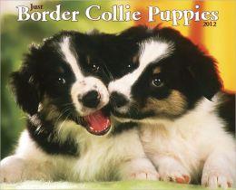 2012 Border Collie Puppies Wall Calendar