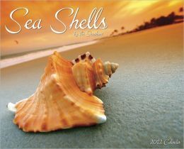 2012 Sea Shells Wall Calendar